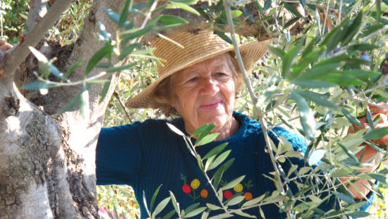 grandmother picking olives